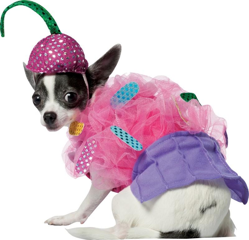 D guisement pour chien de cupcake costume pour animaux d lirant et pas cher - Deguisement halloween chien ...